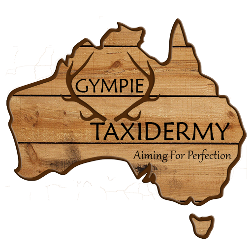 Gympie Taxidermy